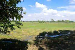ขายที่ดิน สองพี่น้อง สุพรรณบุรี 21 ไร่ ที่ดินทำนา มีน้ำทั้งปี